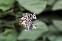 dragonfly montana_10