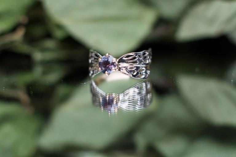dragonfly montana_12