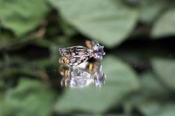 dragonfly montana_9